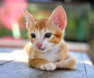 kittens-beautiful-orange-autumn-day-41344555